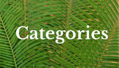 Categories image WP EN